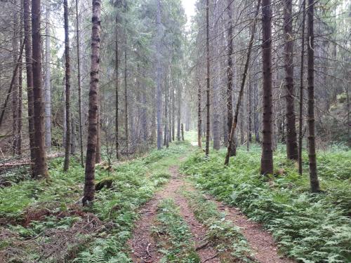 Østmarka; Trolldalen – Smalvann – Dølerud…
