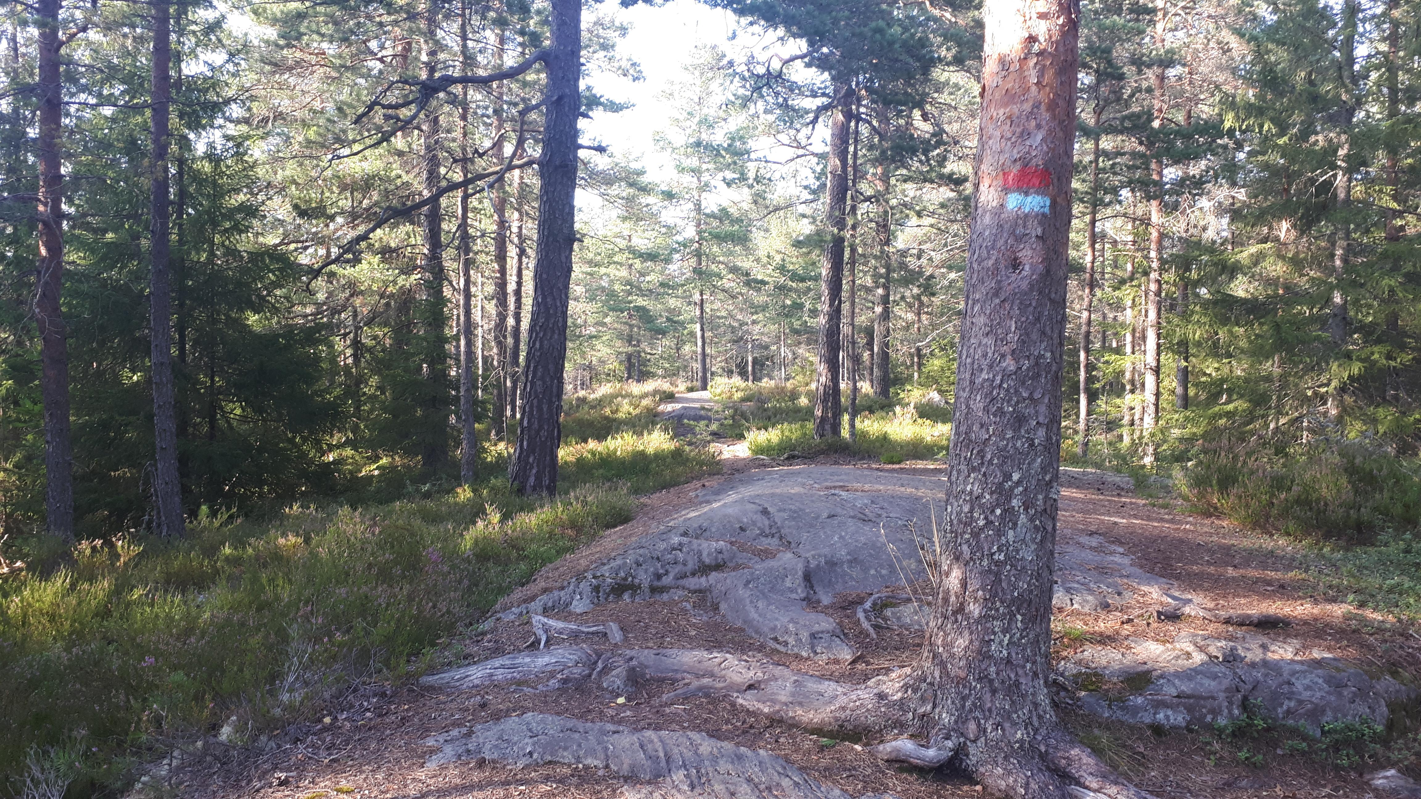 Østmarka; Nøklevann rundt inkl. Høyås – Slettfjellet…..