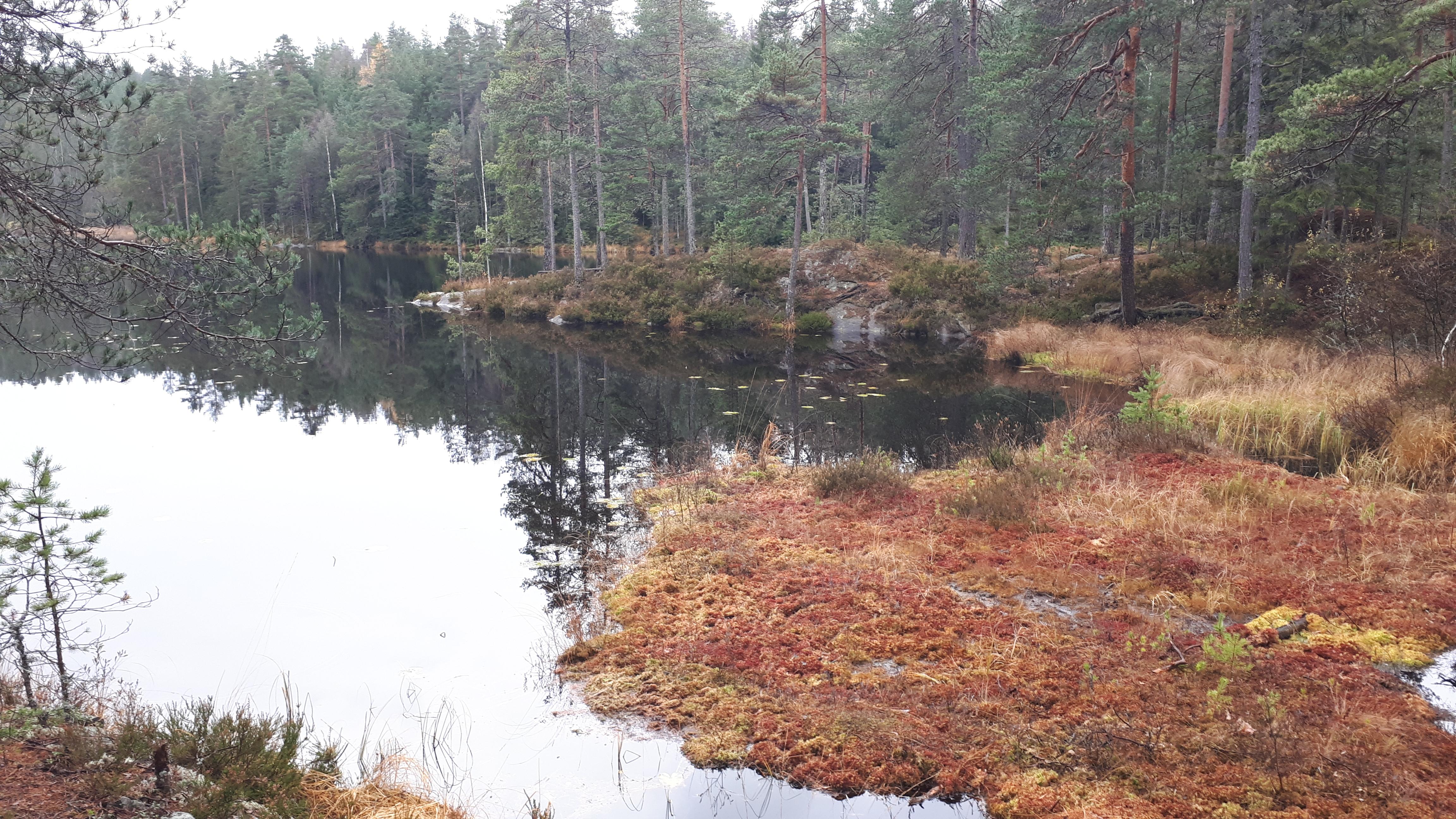 Østmarka; Fra Durud til Gapahuken sør i Bindingsvann – t/r…