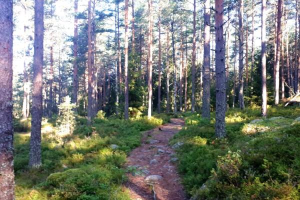 Nøklevannskogen på kryss og tvers i bilder….