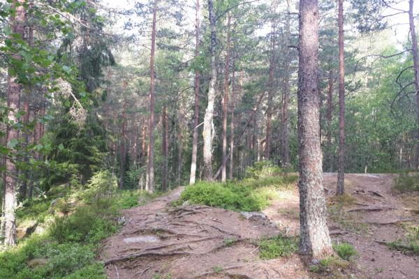 Østmarka; Litt rundt omkring i Nøklevannskogen….