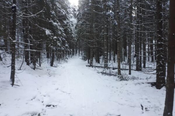 Østmarka; Stiløping uten pigger i Trolldalen – Gudbrandsdalen….