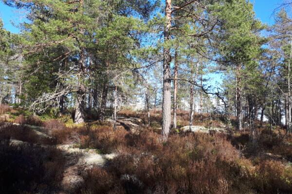 Østmarka; Gudbrandsdalen – Langvannsbrenninga – Sotåsen…..