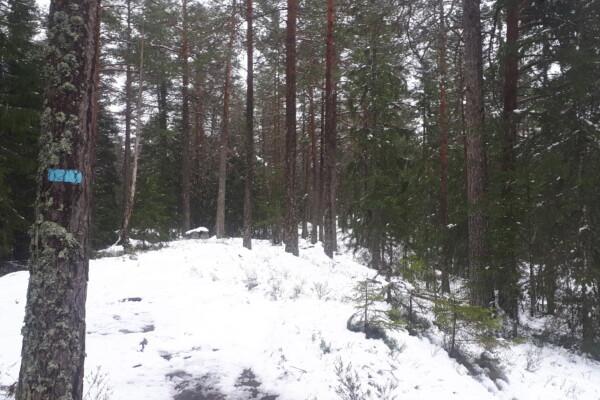 Østmarka; Stiløping over Slettfjell er like fint alle årstider…..