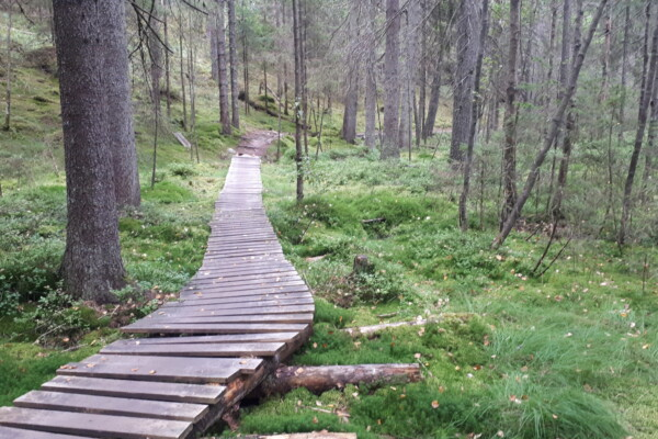 Østmarka; Sarabråtåsen – Kamphaugknatten – Gullsmeden…….