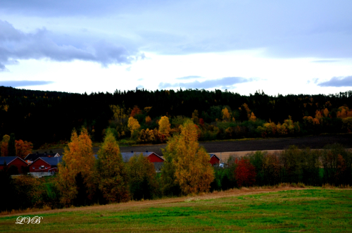 Høstens vakre farger!