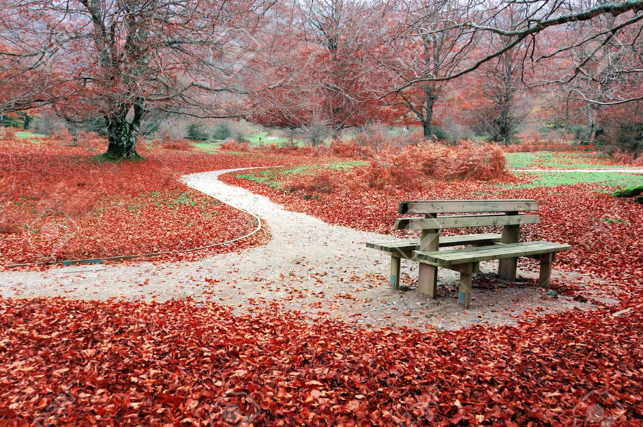 bench in park on autum
