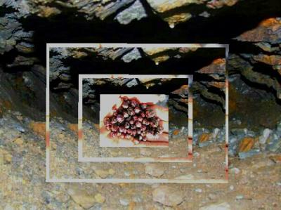 8b1a9186 Han kan så meget mer enn om edelstener og krystaller, blant annet om  sommerfugler. Hvilket jeg lover å komme tilbake til.