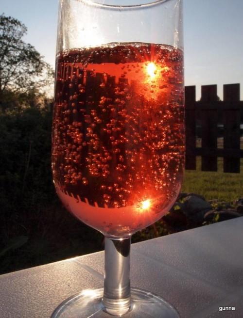 Rosevin på campingtur i plastglass i sommervarmen