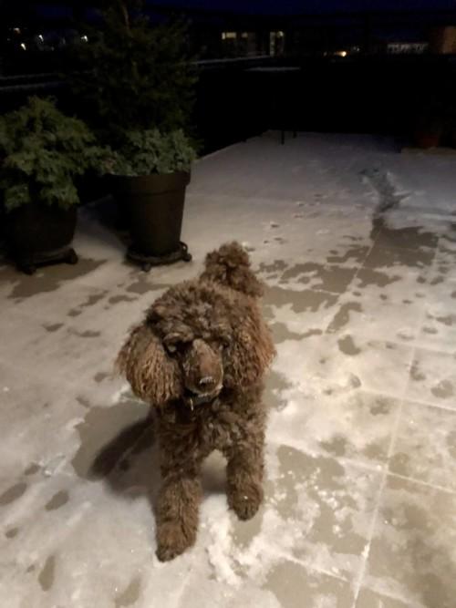 Puddel i den første snøen