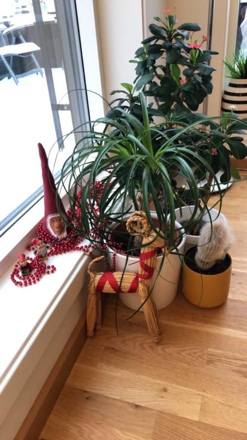Litt av årets sparsommelige julepynting