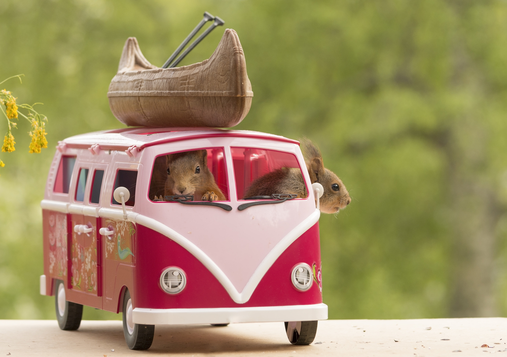 red squirrels sitting in a camping bus