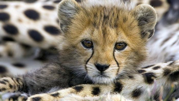 dyr i sør afrika