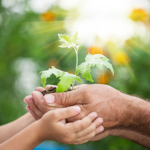 Senior man and baby holding young maple tree in hands against spring green background. Environmental protection concept