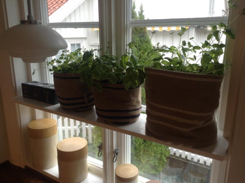 Oppbevaring av urter
