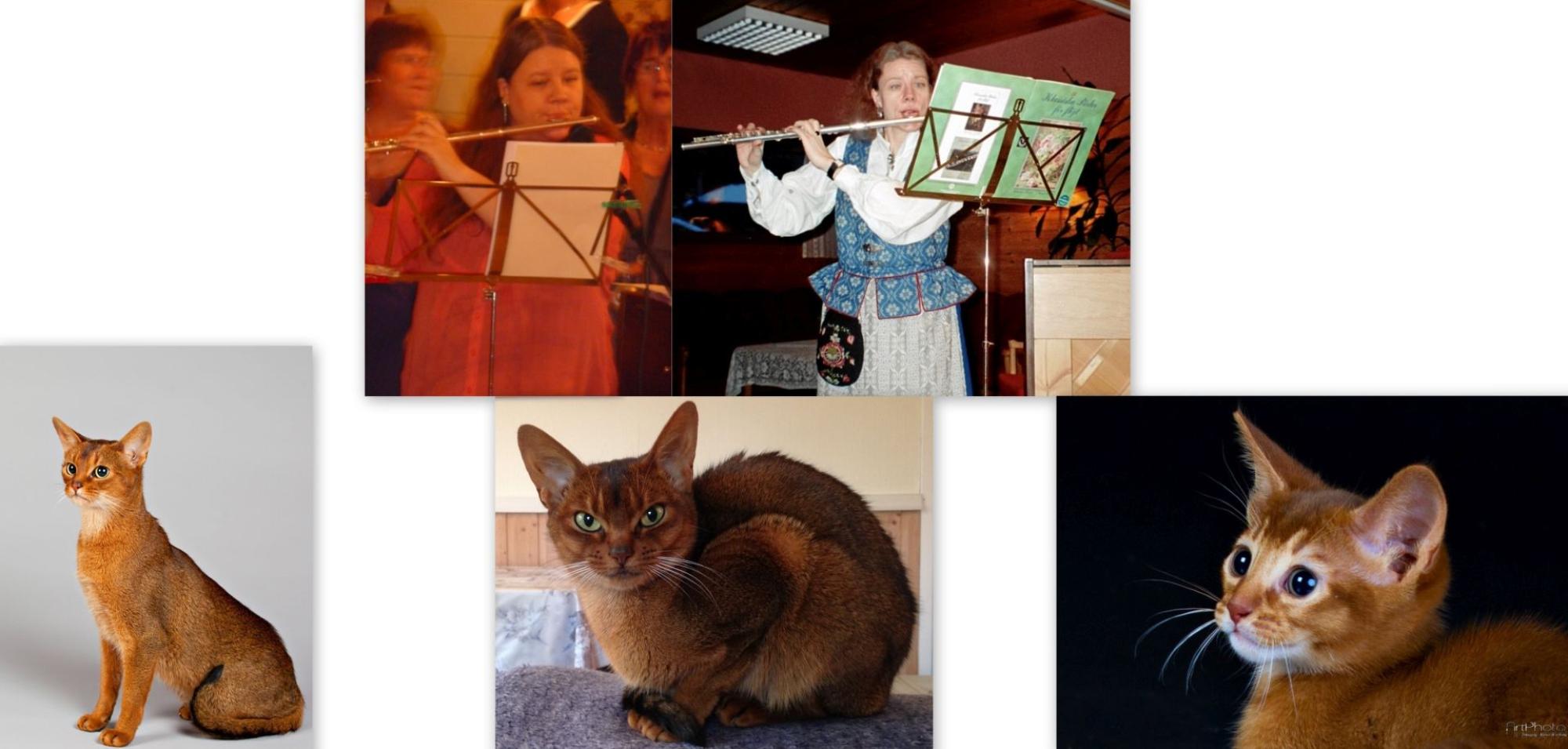 Toril sin hverdag med musikken og kattene